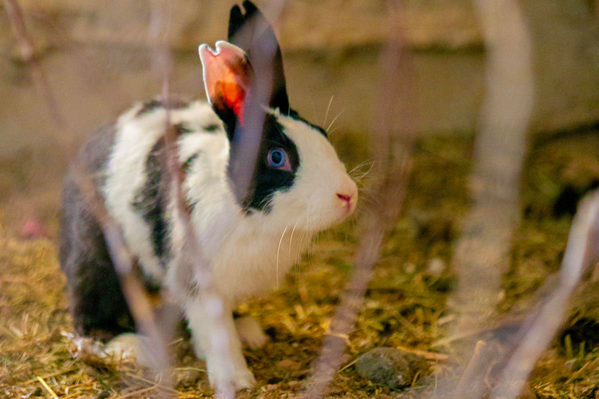 greening-the-desert-project-permaculture-rabbits